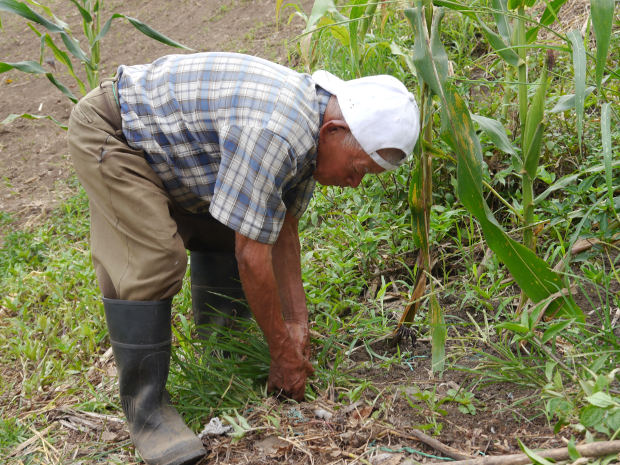 agricultor de 100 años en caldas